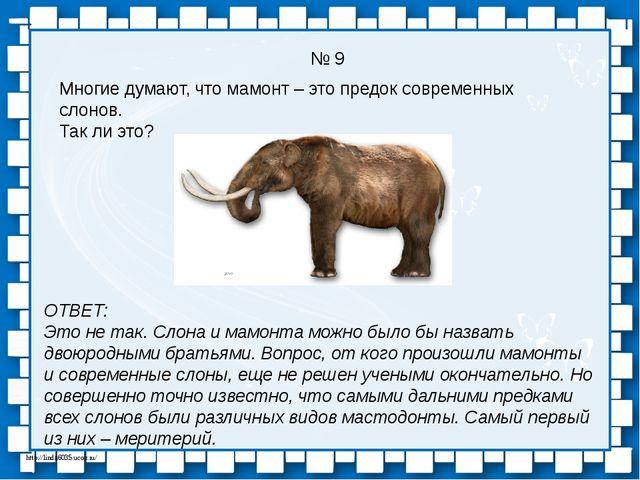 № 9 Многие думают, что мамонт – это предок современных слонов. Так ли это? ОТ...