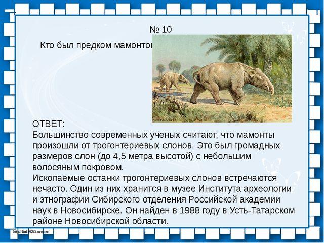 № 10 Кто был предком мамонтов? ОТВЕТ: Большинство современных ученых считают,...
