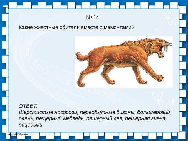 № 14 Какие животные обитали вместе с мамонтами? ОТВЕТ: Шерстистые носороги, п...