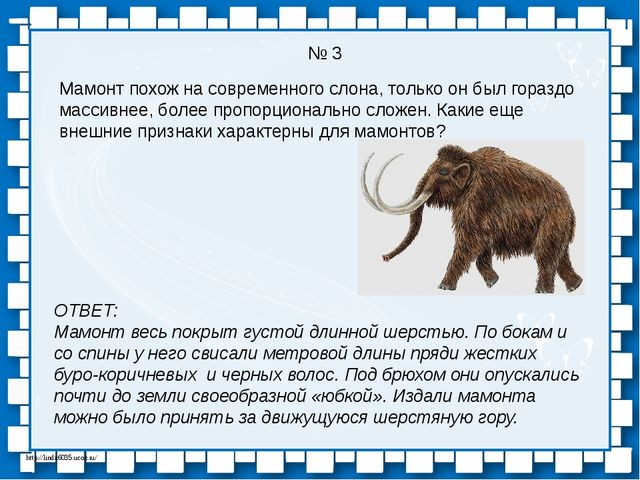 № 3 Мамонт похож на современного слона, только он был гораздо массивнее, боле...