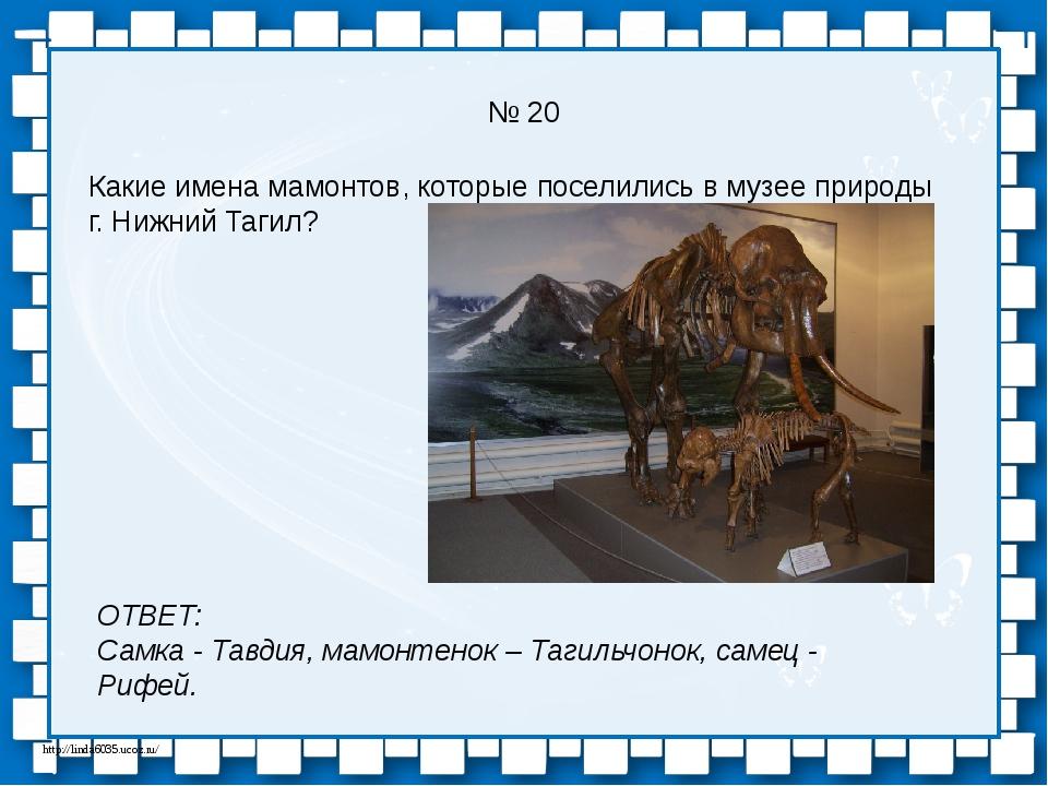 № 20 Какие имена мамонтов, которые поселились в музее природы г. Нижний Тагил...