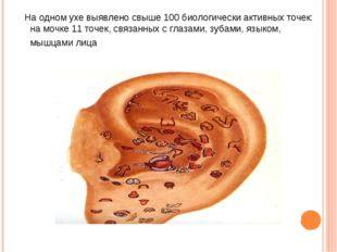 тНа одном ухе выявлено свыше 100 биологически активных точек: на мочке 11 точ
