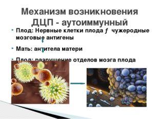 Плод: Нервные клетки плода → чужеродные мозговые антигены Мать: антитела мате