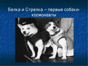 Белка и Стрелка – первые собаки-космонавты