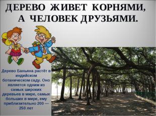 ДЕРЕВО ЖИВЕТ КОРНЯМИ, А ЧЕЛОВЕК ДРУЗЬЯМИ. Дерево Баньяна растёт в индийском б