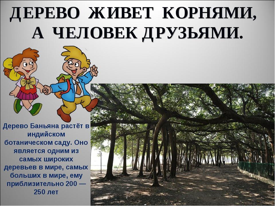 ДЕРЕВО ЖИВЕТ КОРНЯМИ, А ЧЕЛОВЕК ДРУЗЬЯМИ. Дерево Баньяна растёт в индийском б...