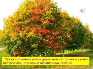 Сухая солнечная осень дарит нам не только хорошее настроение, но и сочно окр
