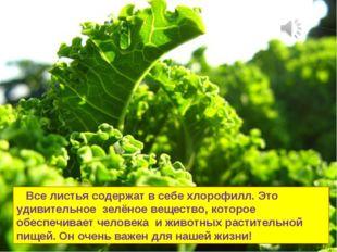 Все листья содержат в себе хлорофилл. Это удивительное зелёное вещество, кот