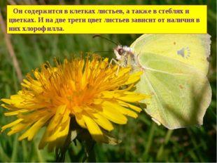 Он содержится в клетках листьев, а также в стеблях и цветках. И на две трети