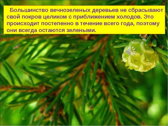 Большинство вечнозеленых деревьев не сбрасывают свой покров целиком с прибли...