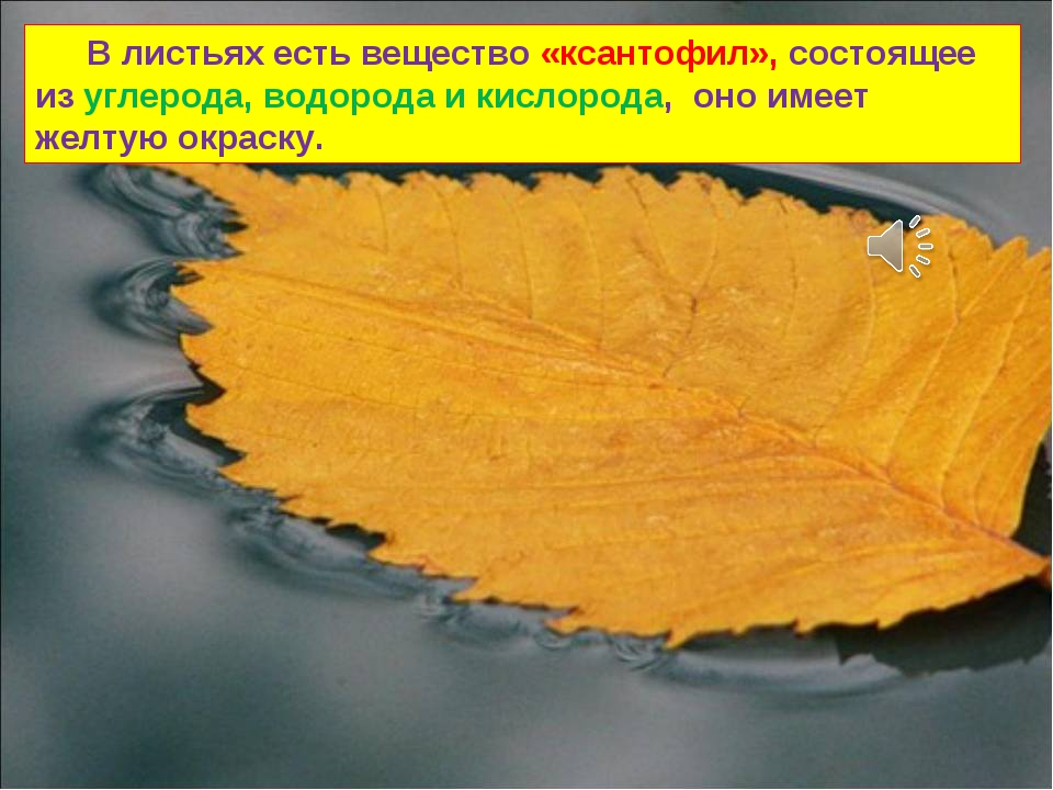 В листьях есть вещество «ксантофил», состоящее из углерода, водорода и кисло...