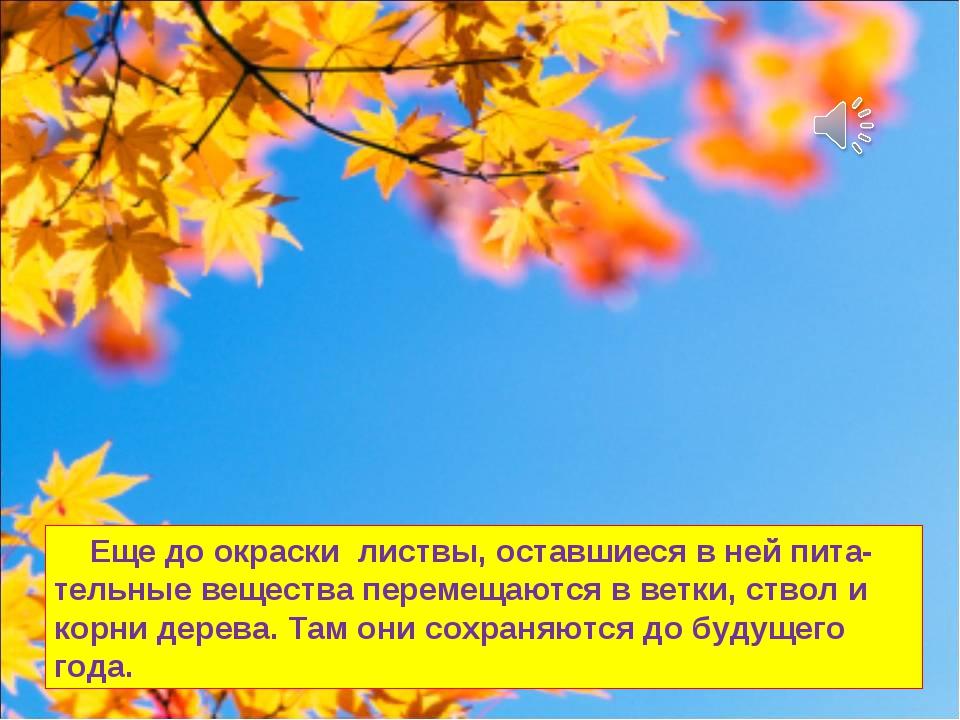 Еще до окраски листвы, оставшиеся в ней пита-тельные вещества перемещаются в...