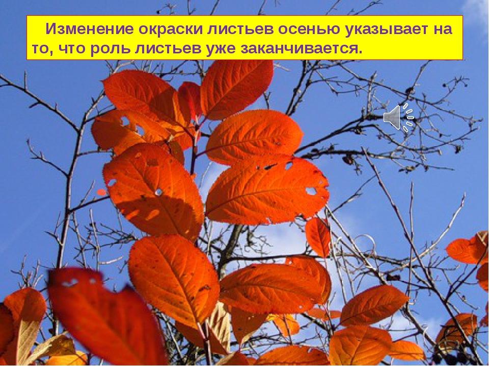 Изменение окраски листьев осенью указывает на то, что роль листьев уже закан...
