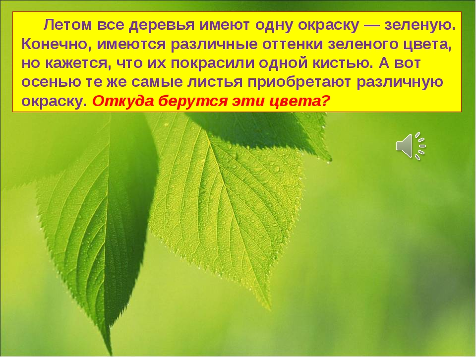 Летом все деревья имеют одну окраску — зеленую. Конечно, имеются различные о...