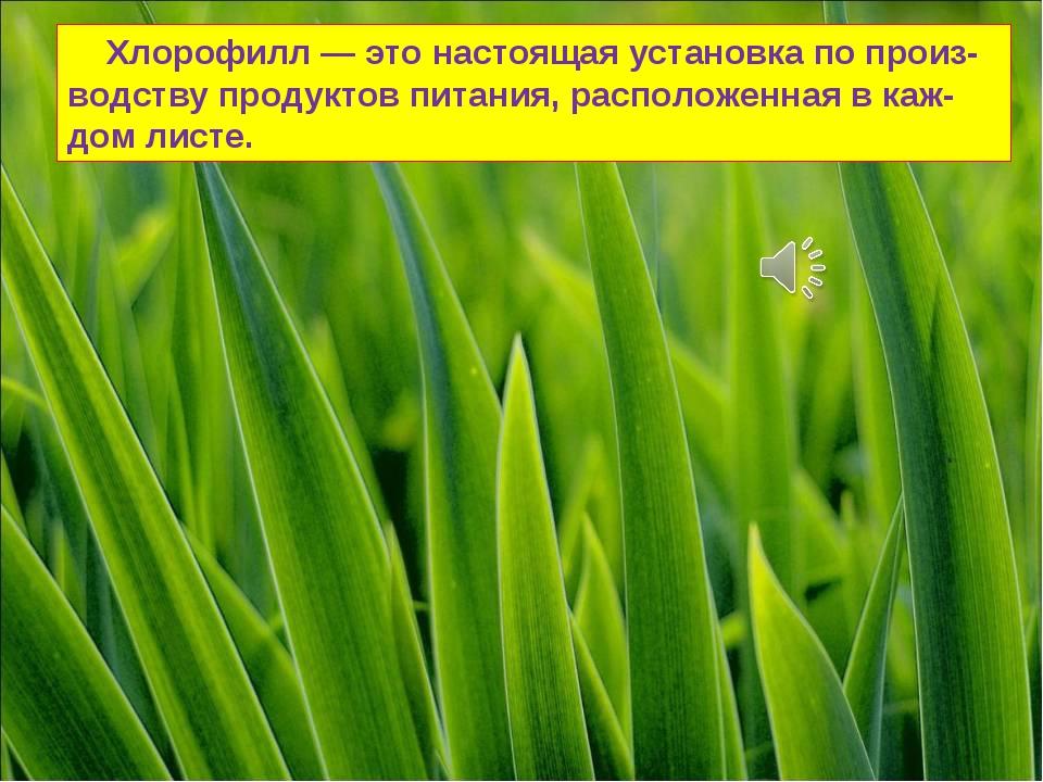 Хлорофилл — это настоящая установка по произ-водству продуктов питания, расп...