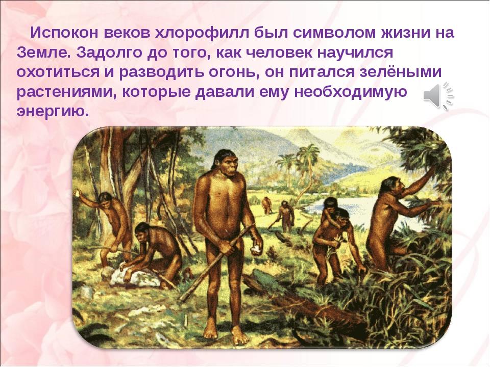Испокон веков хлорофилл был символом жизни на Земле. Задолго до того, как че...