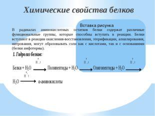 Химические свойства белков В радикалах аминокислотных остатков белки содержат