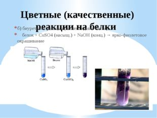 Цветные (качественные) реакции на белки б) биуретовая реакция (на пептидные с