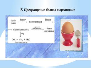 7. Превращение белков в организме