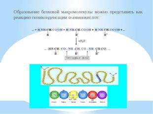 Образование белковой макромолекулы можно представить как реакцию поликонденса