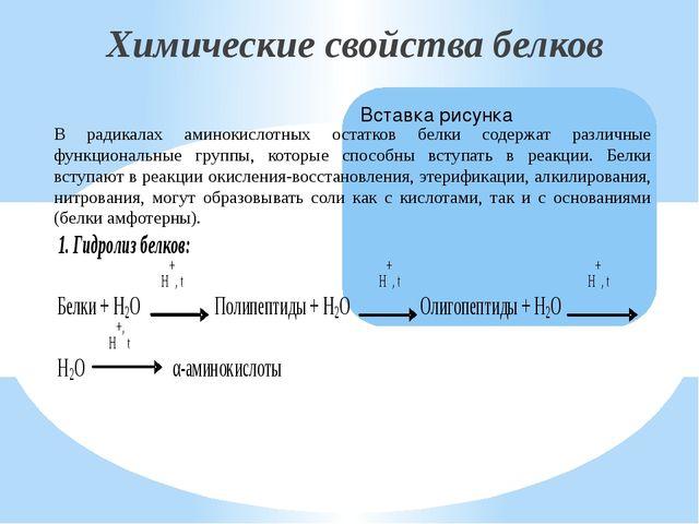 Химические свойства белков В радикалах аминокислотных остатков белки содержат...
