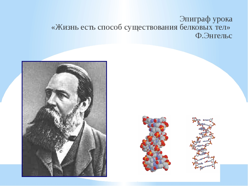 Эпиграф урока «Жизнь есть способ существования белковых тел» Ф.Энгельс