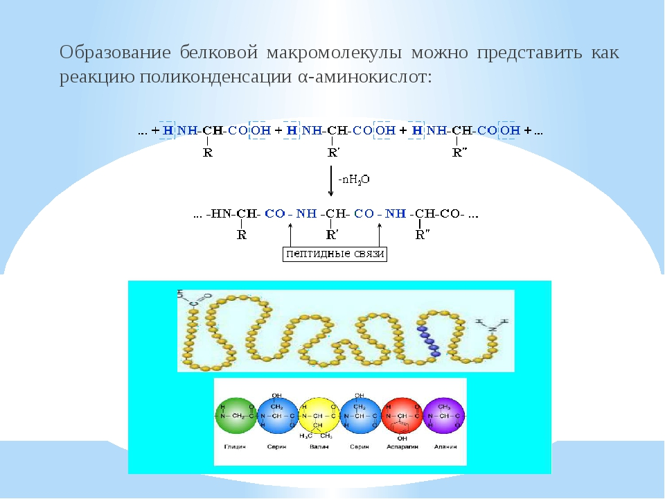 Образование белковой макромолекулы можно представить как реакцию поликонденса...