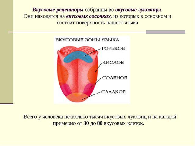 Вкусовые рецепторы собранны во вкусовые луковицы. Они находятся навкусовых...