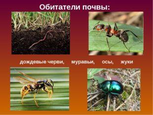 Обитатели почвы: дождевые черви, муравьи, осы, жуки