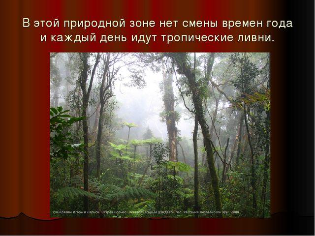 В этой природной зоне нет смены времен года и каждый день идут тропические ли...