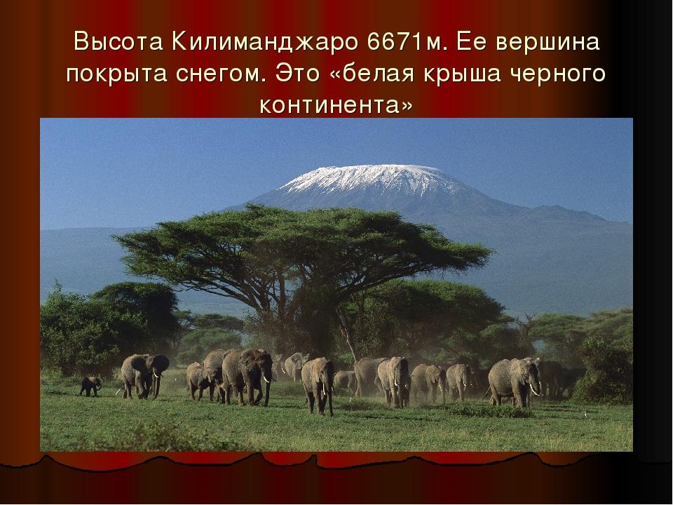 Высота Килиманджаро 6671м. Ее вершина покрыта снегом. Это «белая крыша черног...
