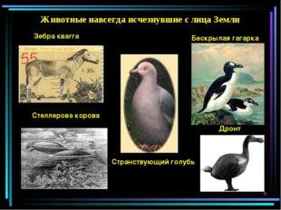 Животные навсегда исчезнувшие с лица Земли Зебра квагга Странствующий голубь