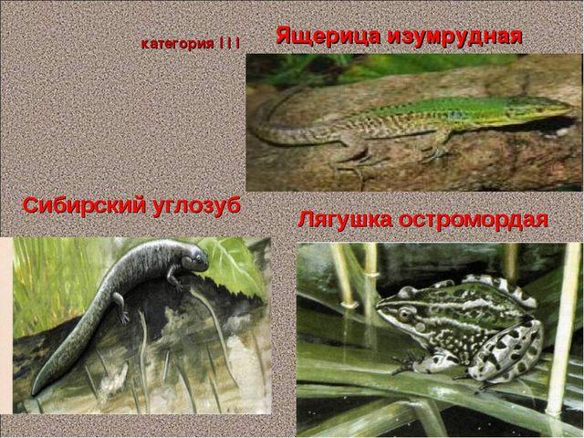 Ящерица изумрудная Сибирский углозуб категория I I I Лягушка остромордая Пано...