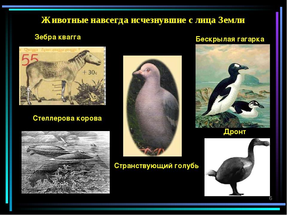 Животные навсегда исчезнувшие с лица Земли Зебра квагга Странствующий голубь...