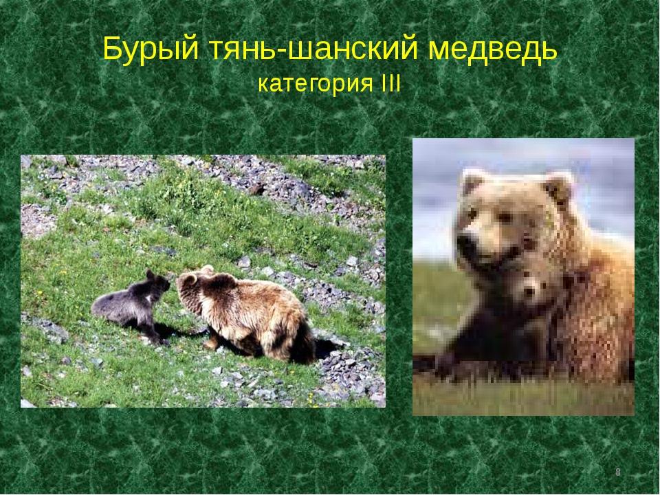 Бурый тянь-шанский медведь категория III *