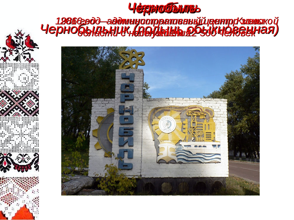 Чернобыль Чернобыльник (полынь обыкновенная) Чернобыль 1986 год – администрат...