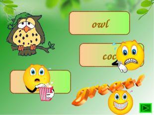 owl cock hen