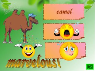 camel chicken cow