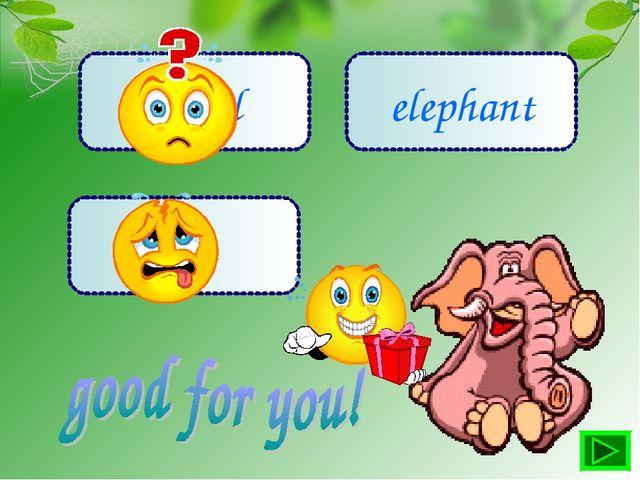 camel lion elephant