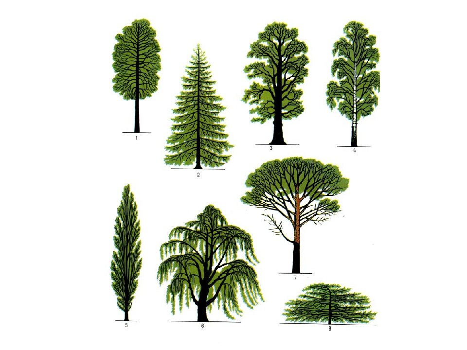 разные виды деревьев картинки черно-белым интерьер комнаты