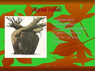 Жуан сабақ Африка мен Австралияның солтүстігінде баобаб ағашы өседі.Оның саба