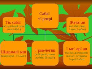 Жатаған (асқабақ,қияр, қауын,қарбыз) Тік сабақ (жүгері,бидай,терек, емен,қайың)
