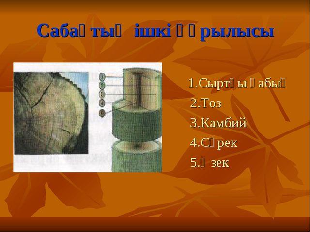 Сабақтың ішкі құрылысы 1.Сыртқы қабық 2.Тоз 3.Камбий 4.Сүрек 5.Өзек