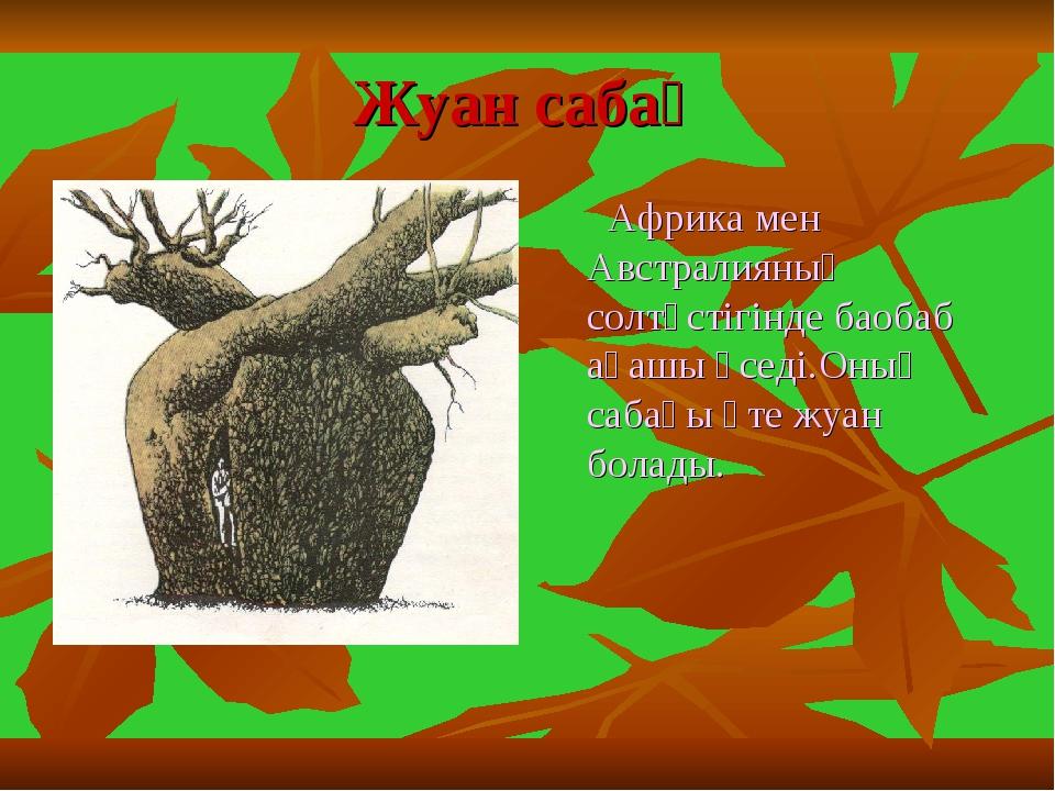 Жуан сабақ Африка мен Австралияның солтүстігінде баобаб ағашы өседі.Оның саба...
