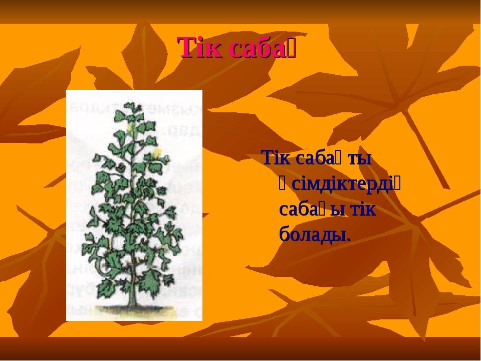 Тік сабақ Тік сабақты өсімдіктердің сабағы тік болады.