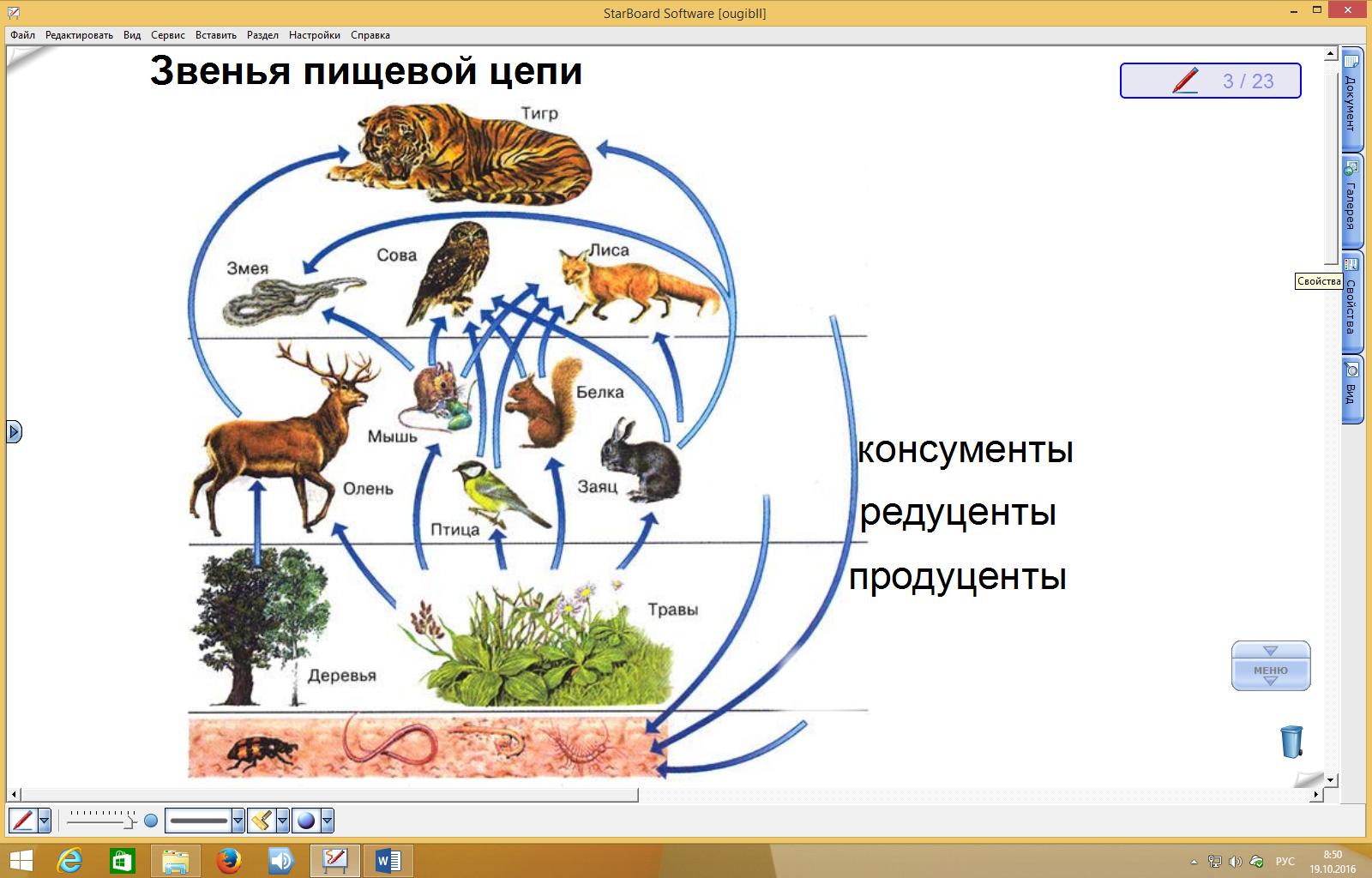 Цепь питания в тундре схема 4 класс
