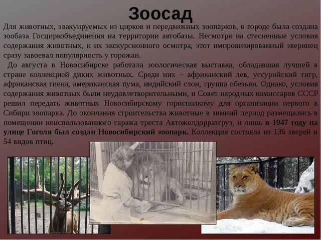 Для животных, эвакуируемых из цирков и передвижных зоопарков, в городе была с...