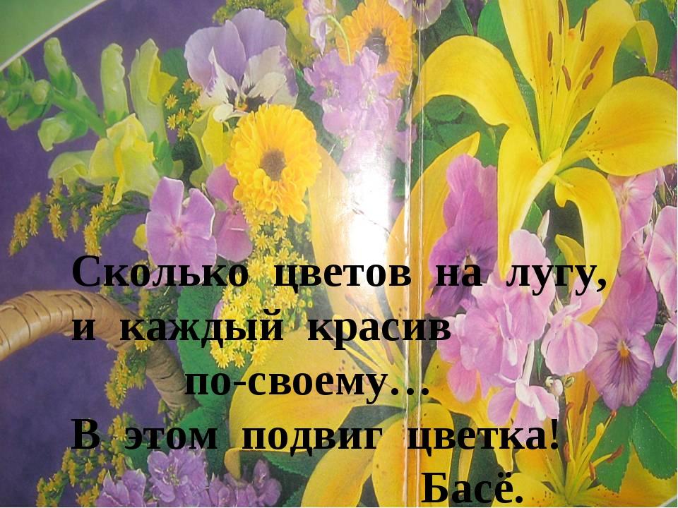 Сколько цветов на лугу, и каждый красив по-своему… В этом подвиг цветка! Басё.