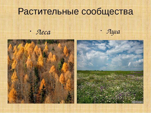 Растительные сообщества Леса Луга