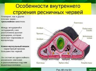 Особенности внутреннего строения ресничных червей Планария, как и другие плос